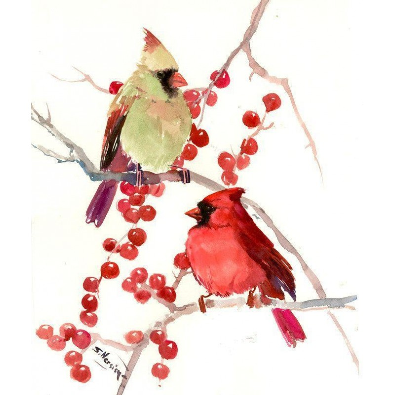 Cardinal Male And Fe...