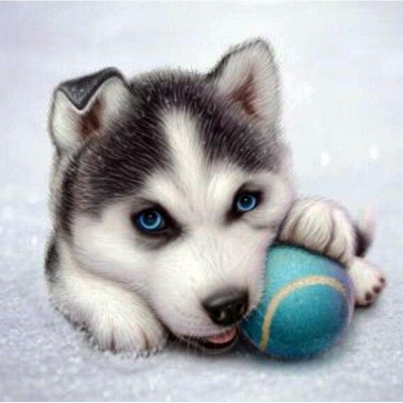 Animal Husky Dog Dia...