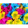 Rainbow Flowers Diamond Painting Kit Rainbow Flowers-11