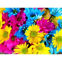 Rainbow Flowers Diamond P...